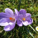 Ademtherapie Mastertraining: Levenskracht vol benutten