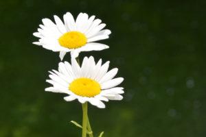 Ademtherapie Mastertraining: Dualiteit